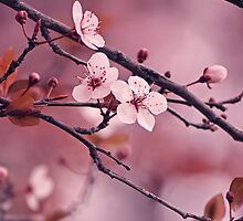 Soft side of Spring IV by CarlaSophia