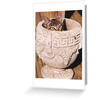 Kitten in Grecian Urn Planter Greeting Card