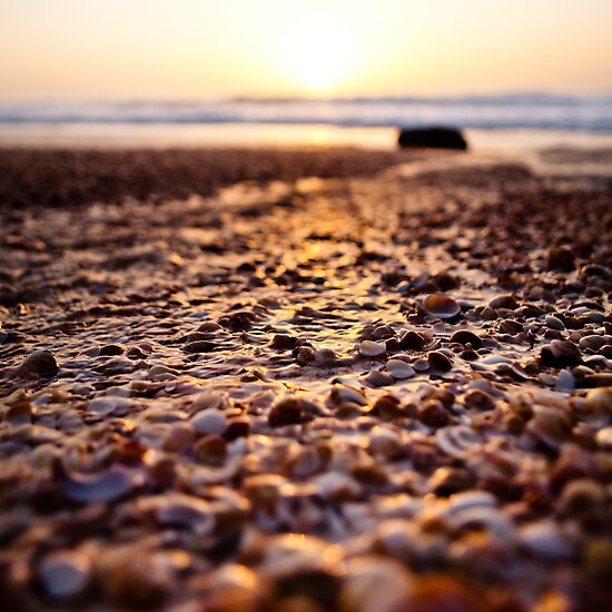 shells@sunset by Victor Bezrukov