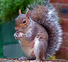 Squirrels Snack Time by AnnDixon