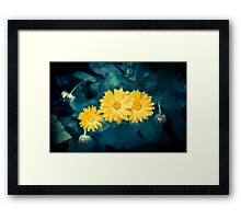 Beautiful yellow flowers growing in a garden Framed Print