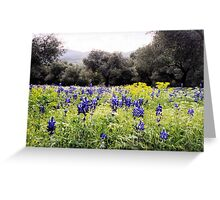 Wild Lupin Display Greeting Card
