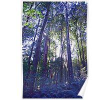 Sun Glimmers through the Trees - Triplet Falls Poster