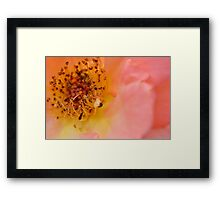 Pink flower macro photo Framed Print