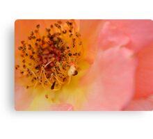 Pink flower macro photo Canvas Print