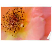 Pink flower macro photo Poster