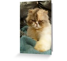 Do I look Amused? Greeting Card