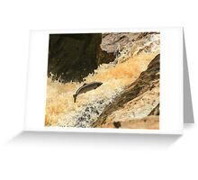 salmon leap clohan co donegal ireland Greeting Card