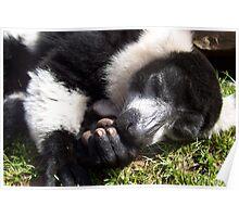 Lemur Dreams Poster