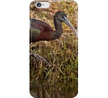 Beautiful Glossy Ibis iPhone Case/Skin