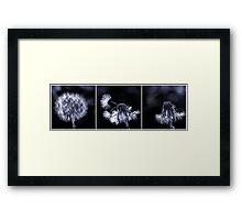 Dandelion destruction Framed Print