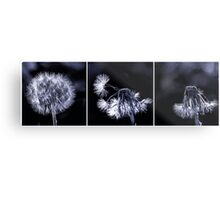 Dandelion destruction Metal Print