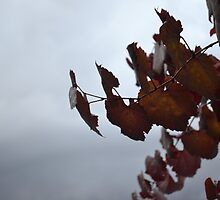 Stormy leaf by danmitchell
