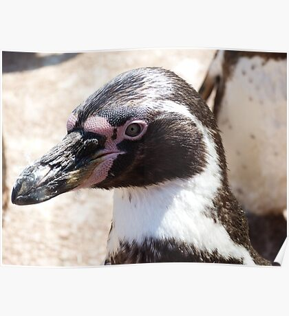 Beaky Penguin Poster