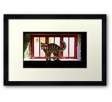 Cat on a Sill Framed Print