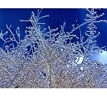 Crystalline Branches Photographic Print