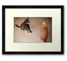 Cat fight! Framed Print