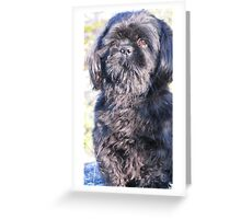 A cute little shih tzu on walk Greeting Card