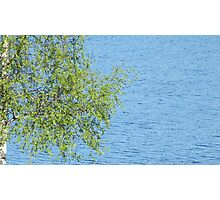 birch bunch of leaves the lake in the background Photographic Print