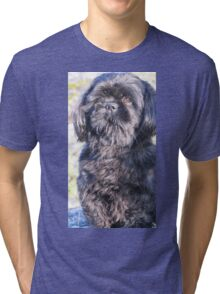 A cute little shih tzu on walk Tri-blend T-Shirt