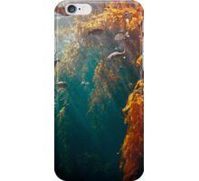 Kelp Forest, Monterey Bay Aquarium, CA 2016 iPhone Case/Skin