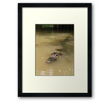 Swamp Gator Framed Print