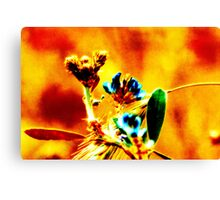 Sheen Canvas Print