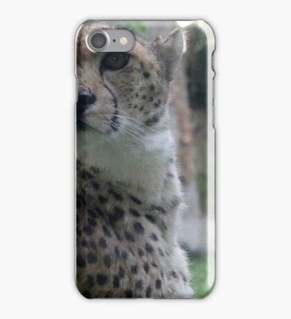 Cheetah  iPhone Case/Skin