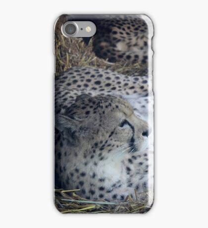 cheetah asleep  iPhone Case/Skin