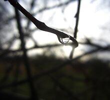 Dew Drops by Lawa202