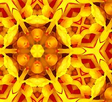 Kaleidoscope Geometry Pattern From Nature 24 by Kenneth Grzesik