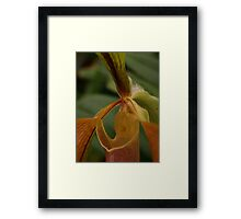 Bristle Orchid  Framed Print