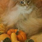 Harvest kitty 1 of 2 by Marie-Eve Boisclair