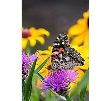 Painted Lady Butterfly III Photographic Print