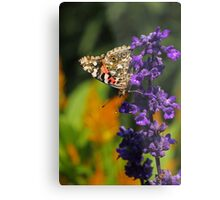 Painted Lady Butterfly IV Metal Print