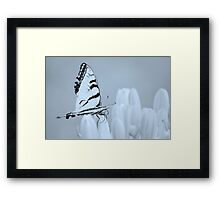 Swallowtail butterfly ~ on lily buds Framed Print