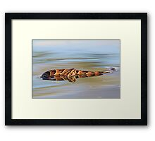 Night Adder - Poisonous Snakes from Africa - Deadly Colors Framed Print