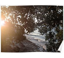 Sunshine through the Mangroves Poster