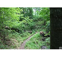 A Hiking Trail Photographic Print