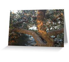 Mangrove Sunset Greeting Card