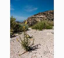 Wildflowers Along Sky Island Scenic Byway to Mt. Lemmon Unisex T-Shirt