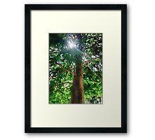 Sunshine Cypress Framed Print