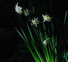 Narcissus in the woods by Duncan Cunningham