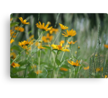 Wildflower Power! Canvas Print