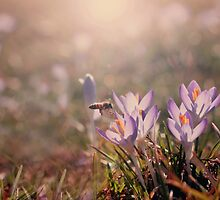 Busy Bee by laughlovephoto
