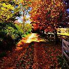 Autumn Lane by Rinaldo Di Battista