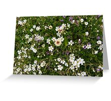 Natural pattern with white small flowers in the grass. Greeting Card