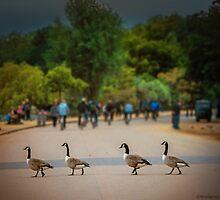 Daffy Road by wallarooimages