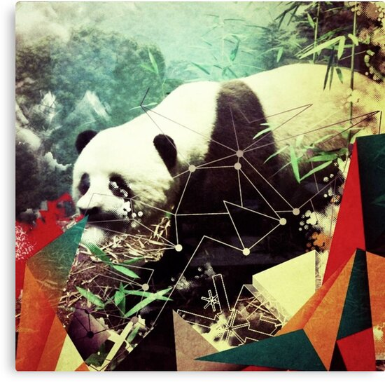 Panda by CareyC