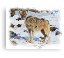 Grey Wolf in Snow Winter Scene Canvas Print